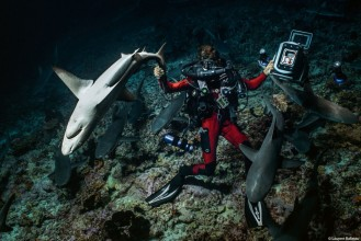(07) 700 SHARKS © Laurent Ballesta.jpg