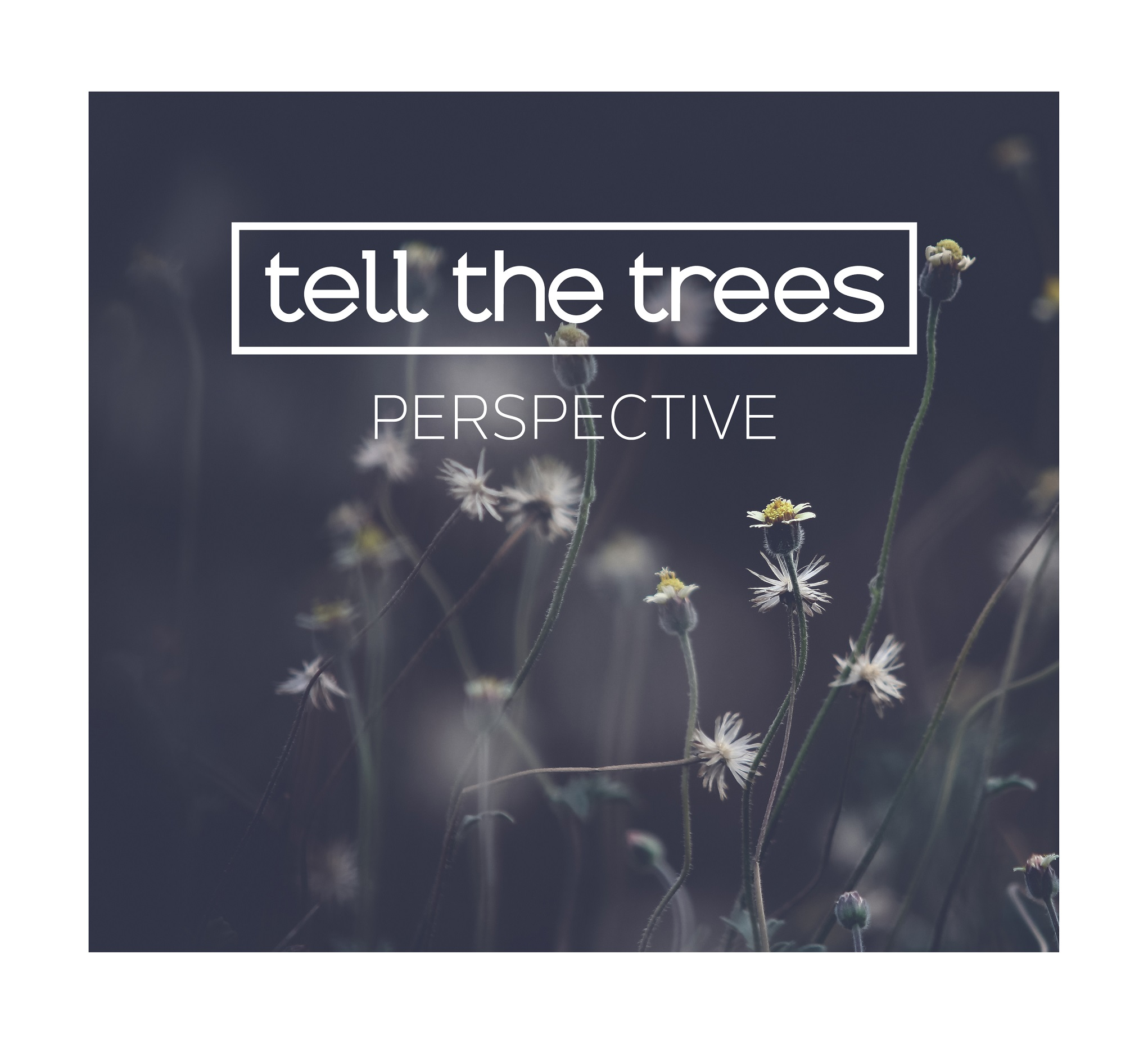 CD Kritik: Tell The Trees - Perspective